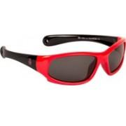 Red Bear Wayfarer Sunglasses(Grey)