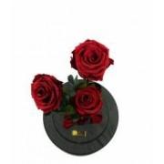 Aranjament 3 Trandafiri Criogenati Rosii Queen Roses in cupola de sticla