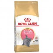 Royal Canin Breed -5% Rabat dla nowych klientówRoyal Canin British Shorthair Kitten - 2 kg Darmowa Dostawa od 89 zł i Promocje urodzinowe!