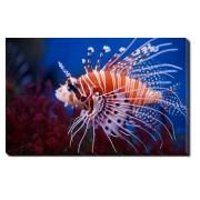 Tablou Canvas Lionfish