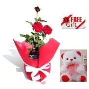 ES ROSE GIFT NATURAL LIVE PLANT WITH FREE COMBO GIFT - 6 inchTEDDYBEAR