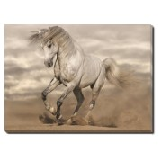 Tablou Canvas Andalusian Horse