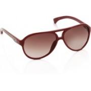 CK Jeans Aviator Sunglasses(Pink)