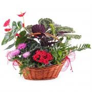 Interflora Centro de Plantas Premium Interflora