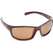 MTV Roadies Sports Sunglasses(Brown)
