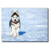 Tablou Canvas Husky Puppy
