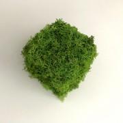 Decor licheni stabilizati - cub
