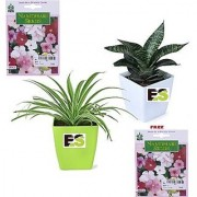 ES Snake Plant Combo with Indica Hybrid Seeds