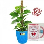 ES LUCKY MONEY PLANT BLUE POT With Gift Anniversary Gift Mug
