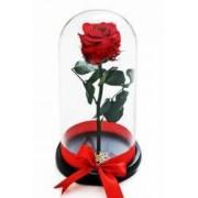 Trandafir Criogenat Rosu In Cupola