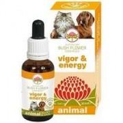 Bush Biotherapies Pty Ltd Vigor & Energy 30ml
