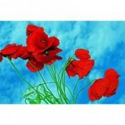 Tablou Canvas Maci rosii Cer senin 90 x 60 cm Rama lemn Multicolor