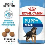 Royal Canin Maxi Puppy / Junior - 2 x 15 kg - Pack Ahorro