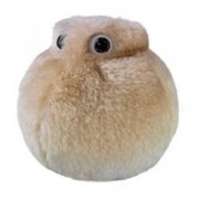 Giant Microbes Fat Cell (Adipocyte) Petri Dish