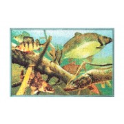 Rohož Delphin AQUA60x40cm