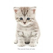 Internet Password Organizer (the Secret Lives of Cats): A Discreet Password Log Book for People Who Love Cats, Paperback/Ceri Clark