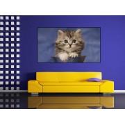 Tablou canvas pisica - cod P11