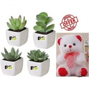 MIX PLANT COMBO OF SECCULENT LIVE ROLLING PLANT WITH FREE COMBO GIFT - 6 inchTEDDYBEAR