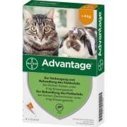Bayer ADVANTAGE 40 mg Lsg.f.kl.Katzen/kl.Zierkaninchen 4X0.4 ml