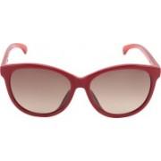 Calvin Klein Aviator Sunglasses(Golden)