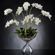Aranjament floral PHALENOPSIS PLANT