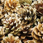 Baker Ross Natural Pine Cones For Crafts - 250g Decorative Pine Cones For Crafts & Wreaths. Natural Craft Supplies. Size 4-5cm.