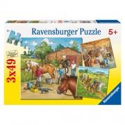 Puzzle lumea cailor, 3x49 piese, RAVENSBURGER