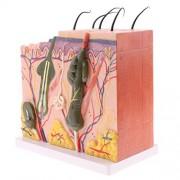 ELECTROPRIME® 50X Enlarge Anatomical Human Skin Model Medical Dermatology Anatomy Teaching