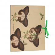 Dille&Kamille Fardeà documents, papillon musée