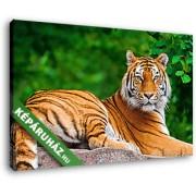Sziklán heverésző tigris (40x25 cm, Vászonkép )