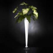 Aranjament floral ARRANGEMENT GLAD