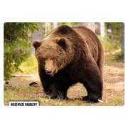 Niedźwiedź brunatny - widokówka