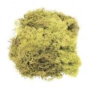Geen Decoratie mos lichtgroen 50 gram