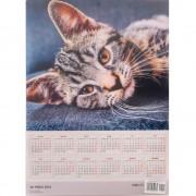 Calendar de perete - Pisici 3D 2019 - Format mare