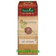 Polygemma Nr.7 Cai Urinare 50 ml Plantextrakt