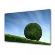 Tablou Canvas Premium Peisaj Multicolor Copacul cerc Decoratiuni Moderne pentru Casa 80 x 160 cm