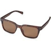 Polaroid Retro Square Sunglasses(Brown)