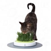 Catit Design Senses Gras Garden - Допълнителна опаковка котешка трева (2 броя х 70 г)