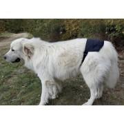 Auris Ceinture magnétique pour chien Doggy Mag de grande ou moyenne taille