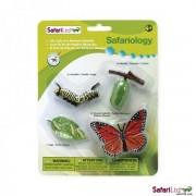Motyl - figurki cyklu rozwojowego