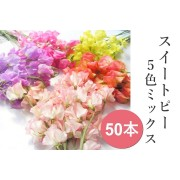 ひと足早い春 スイートピー春色セット50本入 1/4~発送