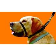 Wonderfood Spa Canny Collar Collare 1 Nero 23-28 Cm