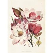 Sköna Ting Poster Magnolia