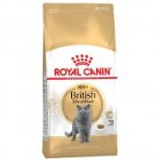 Royal Canin Breed Royal Canin British Shorthair Adult - 4 kg Darmowa Dostawa od 89 zł