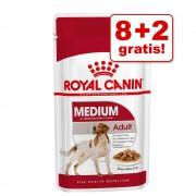 8 + 2 gratis! 10 x 140 g Royal Canin Medium / Maxi - Maxi Adult (10 x 140 g)