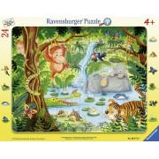 Tip Rama Jungla, 24 Piese