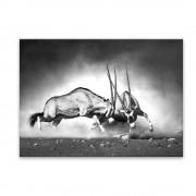 Styler Obraz Styler Glas Animals Gazelle, 70 x 100 cm