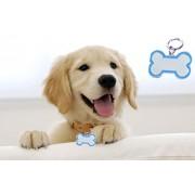 Bone shape Collar Tag cum Pendant for Dog / Puppy / Kitten / Cat (Blue)