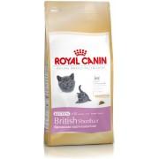 ROYAL CANIN BRITISH SHORTHAIR KITTEN 10kg