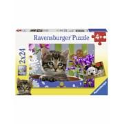 Puzzle Pisicuta, 2X24 Piese Ravensburger